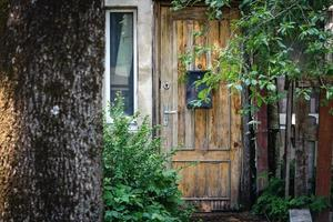 Wooden door with post box behind cherry tree with leaves and unripe berries photo