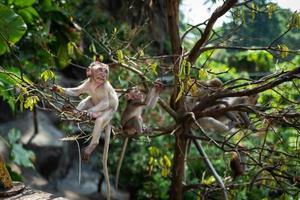 mono con bebé en las cuevas batu kuala lumpur foto