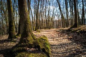 un sendero en el bosque de boppard foto