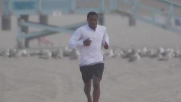 een jonge man loopt op blote voeten door een zwerm meeuwen op het strand. video