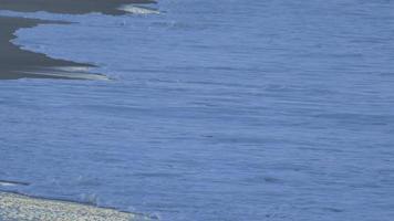 le rivage et la plage de l'océan pacifique. video