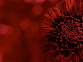 Vista cercana de la flor con fondo de efecto bokeh foto