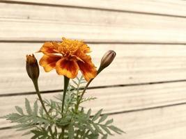 Vista cercana de la flor con fondo de efecto madera foto