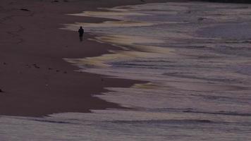 un hombre haciendo jogging en la playa al amanecer. video