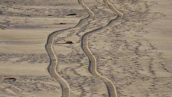 un camion laisse des traces dans le sable de la plage. video