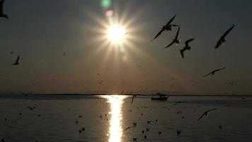 Dark Sunset Ocean Sky And Seabird Silhouettes Flying With Camera Lens Flare video