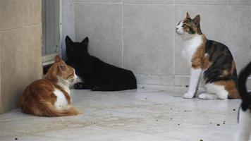 Street Cats Waiting At The Door Of A House To Feed video