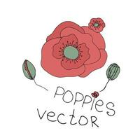 Hand drawn flowers background. Poppies frame vector