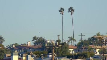 Two twin palm trees stand tall over a town. video