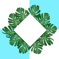 vector illustration. exotic tropical green leaves monstera. paper banner rhombus. blue and white background