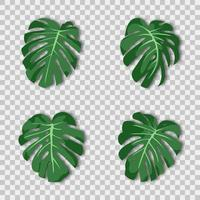 Vector illustration. Exotic tropical green plant. Monstera leaves on a transparent background.