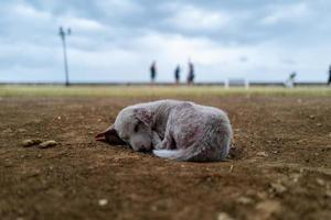 Sick small dog on the Philippines photo