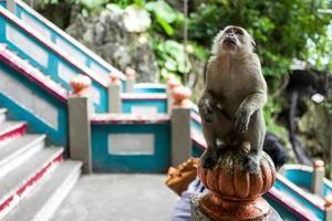 Un mono cerca de las cuevas de batu en kuala lumpur. foto