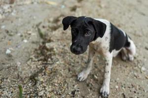 Cute puppy at beach in Labuan Bajo photo