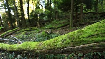 detalles de árboles en un bosque verde. video