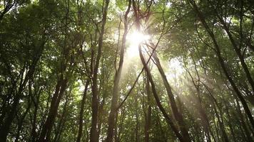 détails des arbres dans une forêt verte. video
