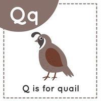 Learning English alphabet for kids. Letter Q. Cute cartoon quail. vector