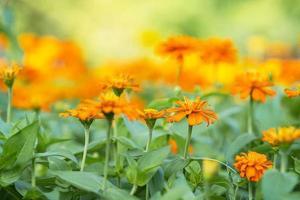 Cerca de flor de naranja en el jardín foto
