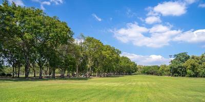 árboles verdes en el hermoso parque bajo un cielo azul foto