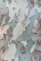 textura de árbol de madera grunge foto