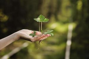 Ecology, protection of natural environment, earth day concept. Growing plant in human hands over green background photo