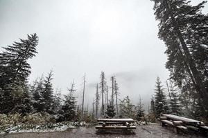 bosque de montaña en invierno. un lugar de esparcimiento de turistas. montañas al fondo en la niebla y en la nieve. foto