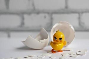 cáscara de huevo blanco de un huevo de gallina roto con fragmentos y un pollo eclosionado aislado. Pascua de Resurrección foto