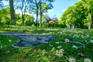 Daisies and footpath with daisy shapes at Leases Park in Necastle, UK photo