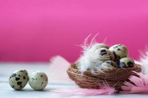 Quail eggs in nest with colorful feathers, on white wooden table against pink wall photo