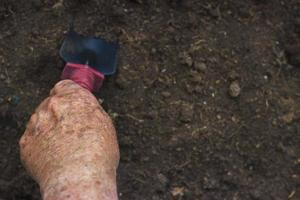 Close up of a hand of a old man holding a trowel, gardening concept photo