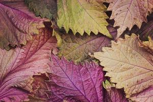 hojas de otoño - fondo de otoño foto