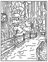 Towering Old-Growth Redwoods in Muir Woods National Monument Part of Golden Gate National Recreation Area California United States Mono Line or Monoline Black and White Line Art vector