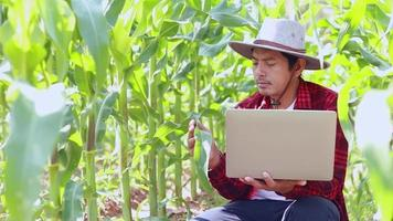 A portrait of a Thai farmer holding a computer notebook in a corn field examining crops, agrobusiness ideas, and innovations. video