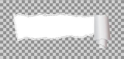 papel rasgado con borde enrollado vector