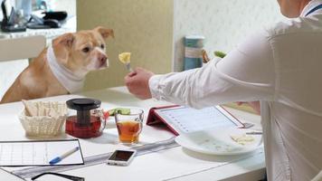 Der Mann mit dem Hund am Tisch isst Freundschaft zwischen Mann und Haustier-Geschäftsmann-Konzept video
