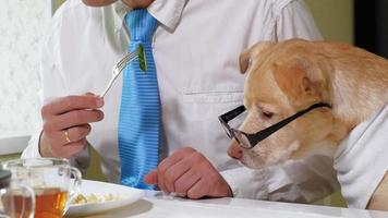 The man with the dog at the table is eating Friendship of man and pet Businessmen concept video