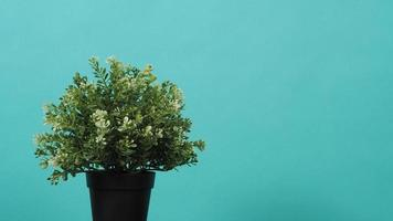 Artificial potted plant on mint background photo