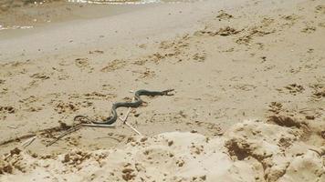 serpiente en la playa en verano video