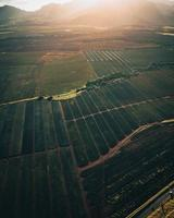 Helicopter aerial view of a pineapple plantation in Oahu, Hawaii photo