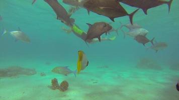 mensen snorkelen in de buurt van een boot met glazen bodem over een koraalrif van een tropisch eiland. video