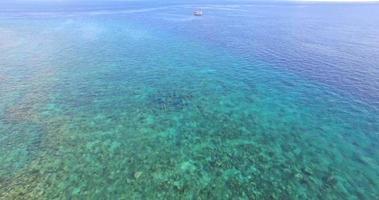 Flygfoto över drönare av en skida av delfiner som simmar över ett korallrev i Maldiverna. video