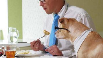de man met de hond aan tafel eet vriendschap van man en huisdier zakenlieden concept video