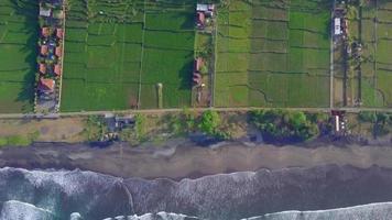 vista aérea do drone dos campos agrícolas verdes, da praia e do mar na Indonésia. video