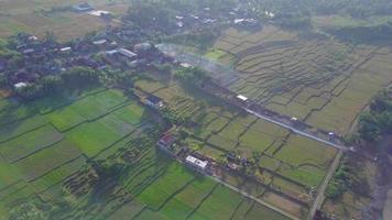 vista aérea do drone dos campos agrícolas verdes na Indonésia. video