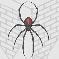 Spider on wall of home vector