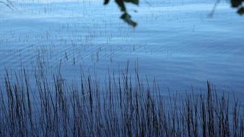 vista panorâmica de uma paisagem de lago galhos e árvores. video