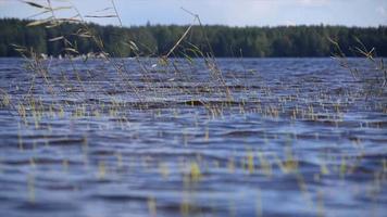 vista panorámica de un paisaje de lago ramas y árboles. video
