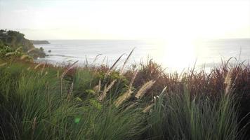 rastreamento tiro através de gramas na praia e no pôr do sol. video