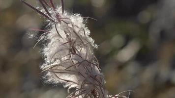una pianta in montagna. video
