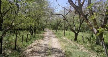 vista pov de uma estrada secundária e árvores. video